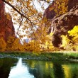 Autumn river — Stock Photo #3713990
