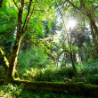 Rain forest — Stock Photo #3714054