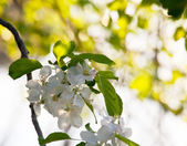 In garden — Stock Photo