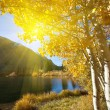 Autumn light - Stock Photo