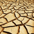 Drought lands - Stock Photo