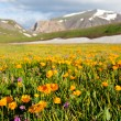 Mountains meadow - Stock Photo