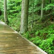 Boardwalk — Stockfoto
