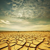 Drought lands — Stock Photo