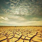 Drought lands — Stock Photo