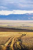Road in field — Stock Photo