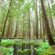 Stock Photo: Forest