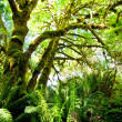 Rain forest — Stock Photo #3778638