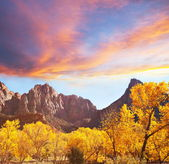 Autumn in Zion — Stock Photo