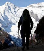 Himalaya zammı — Stok fotoğraf