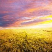 Prado na sunset — Fotografia Stock
