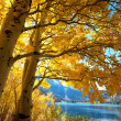 Autumn tree — Stockfoto #3878310