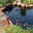 Privat garden with tropical plant and fish pond in South China,Guangdong. — Stock Photo #2774862