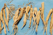 Dried Chinese herbal Gingseng — Stock Photo