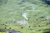 The green mountainous pasture — Stock Photo
