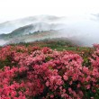 Misty spring mountain with azelea flowers and bushes. — Stock Photo #3000897