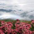 Spring misty mountain landscape with peach flowers — Stock Photo #3000912