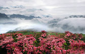 Spring misty mountain landscape with peach flowers — Stock Photo