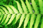 The verdure spring fern leaves — Stock Photo
