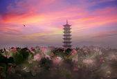 Lotus pond and ancient Chinese tower in sunset — Stock Photo