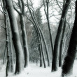 Trees in snow in winter park — Stock Photo #2898054