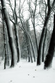 Trees in snow in winter park — Stock Photo