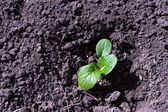 Green young sprout in the earth — Stock Photo