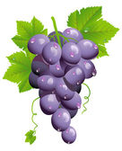 Grape cluster — Stock Vector