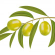 Green olives on branch — Stock Vector