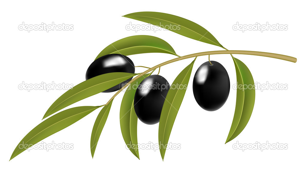 Black olives on branch, detailed vector illustration  — Stock Vector #3131872