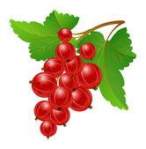 Red gooseberries — Stock Vector