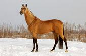 Bushskin horse — Stock Photo
