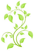 Young sapling — Stock Vector