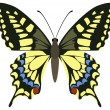 Papilio machaon — Stock Vector