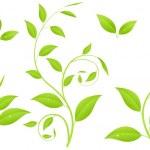 Green branches — Stock Vector