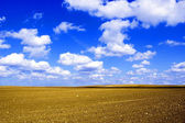 Plowed field conceptual image. — Stock Photo