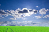 Green field and blue sky conceptual image. — Stock Photo