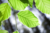Leaves conceptual image. — Stock Photo