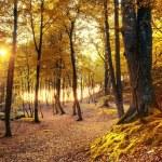 ������, ������: Autumn scenery