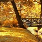 Autumn scenery. — Stock Photo #3710302