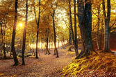 Autumn scenery. — Stock Photo