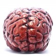 Bloody Brain on White - Stock Photo