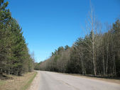 The road in the woods. Early Spring — Stock Photo