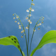 Flowering lily May (Convallaria majalis) against the blue sky — Stock Photo #3461610