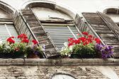 Multi-coloured flowers at windows — Stock Photo