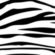 Zebra stripes — Stock Photo