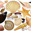 Shell collection - Stock Vector