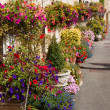Hanging baskets - Stock Photo
