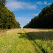 Grassy path - Stock Photo