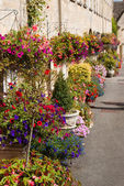 Hanging baskets — Stock Photo